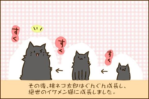 その後、桃ネコ太郎はぐんぐん成長し、絶世のイケメン猫に成長しました。