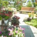 img_gardening_sharehouse_07