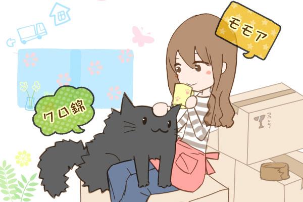 猫と引越しのイメージ画像