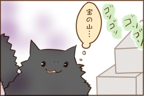 img_cat_box_02