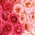 img_rose_bath_07