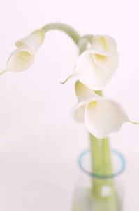 img_flower01