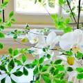 img_refresh_flower_43