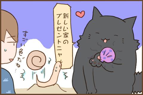 img_kuronishiki_snail_04