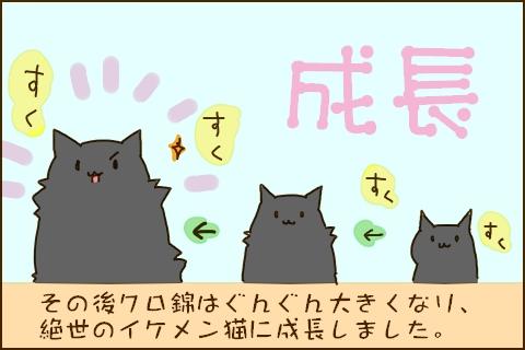 その後クロ錦はぐんぐん大きくなり絶世のイケメン猫に成長しました。