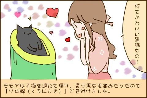 「なんてかわいい黒猫なの!」モモアは子猫を連れて帰り、真っ黒な毛並みだったので「クロ錦(くろにしき)」と名付けました。